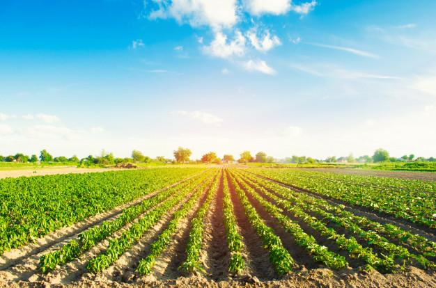 چرا باید حبوبات ارگانیک مصرف کنیم؟! + فیلم/ خرید حبوبات ارگانیک از مزرعه