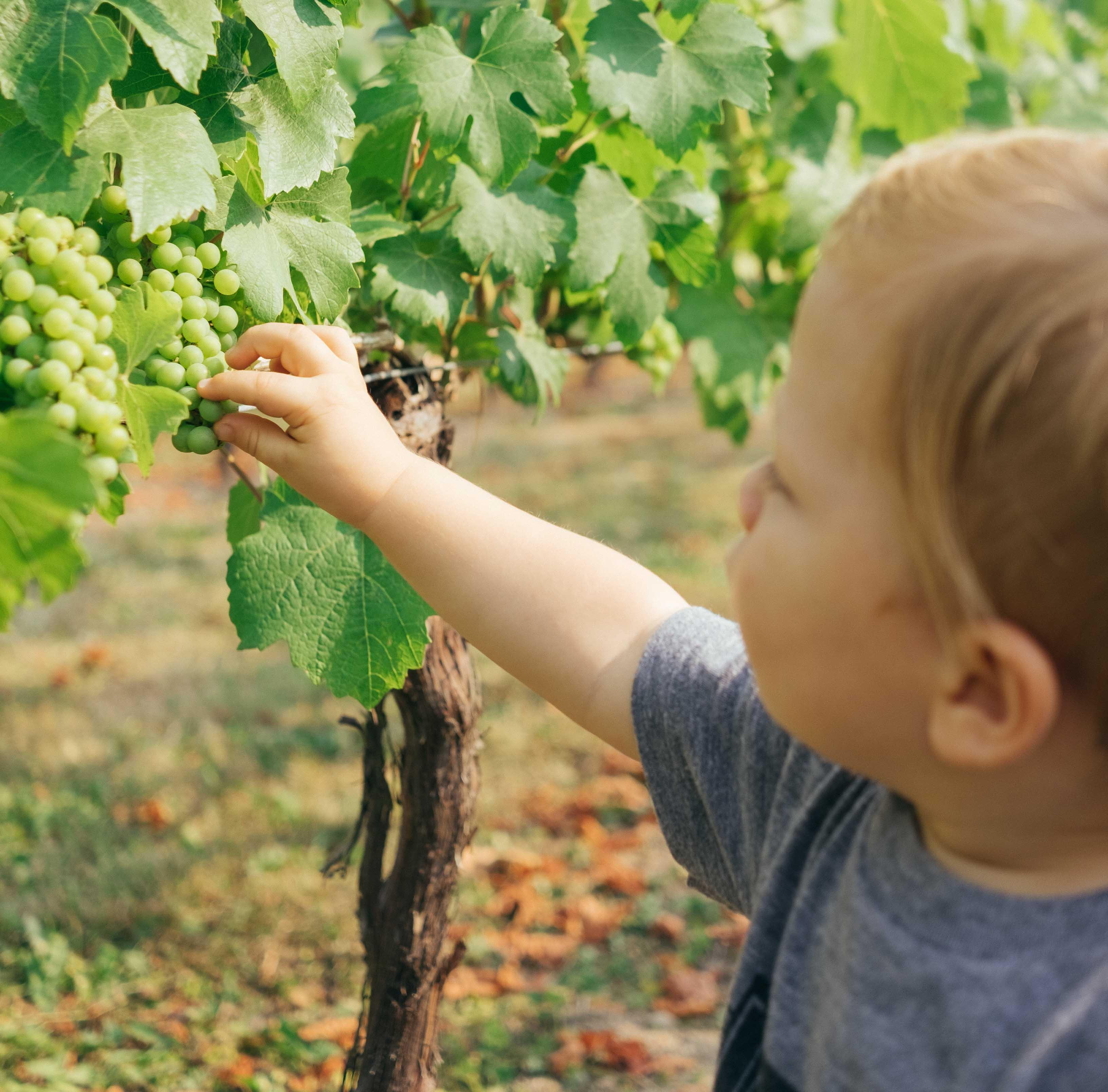 چرا باید محصولات ارگانیک مصرف کنیم ؟ +خرید محصولات ارگانیکک