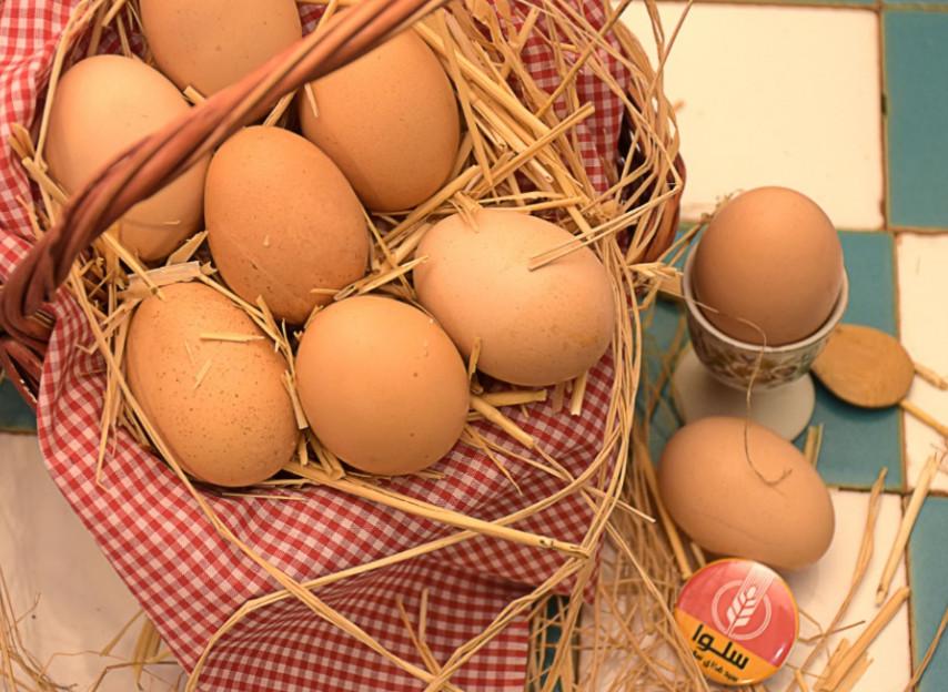 خرید تخم مرغ بومی