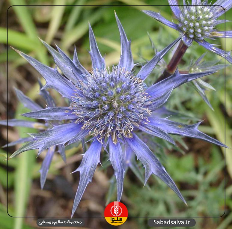 خواص اثبات شده 7 نوع عسل/ کنار، گز، آویشن، گشنیز، زول، گون، چهل گیاه
